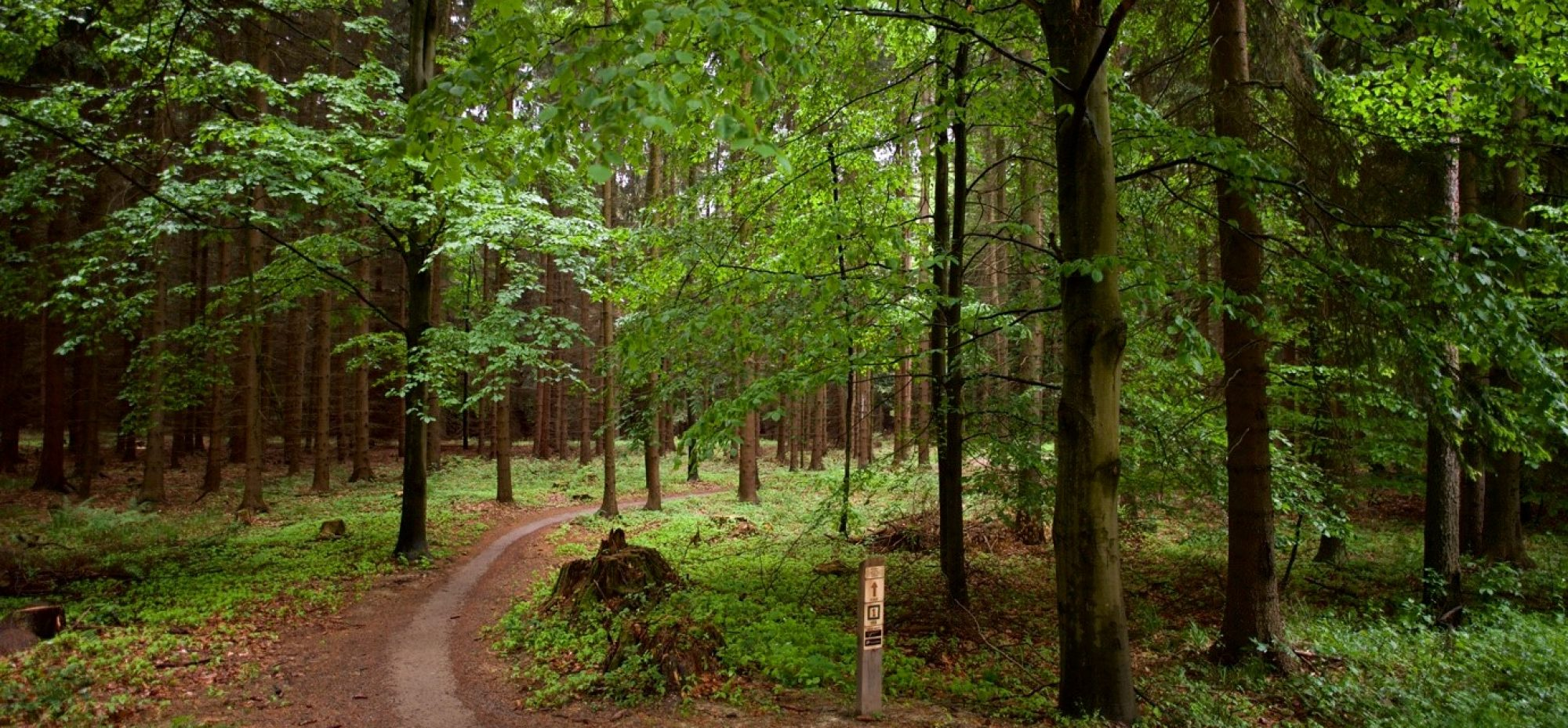 Czech Republic Model Forest